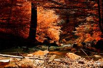 Herbstwald von Heiko Döhrling