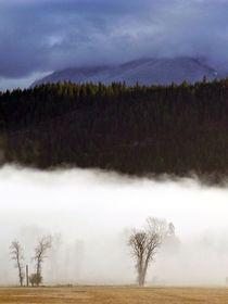 Kahle Bäume im Nebel von Jutta Ploessner