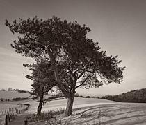 Winter tree von Jürgen Müngersdorf