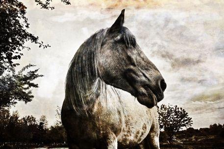 Pferd-016swc