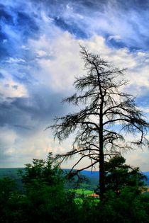 Dead Tree by mario-s