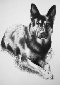Schäferhund von Stephanie Blodau