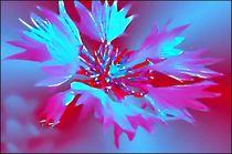 Blumiges 03 Kornblume von bilddesign-by-gitta