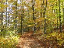 Wanderweg durch einen Laubwald im Herbst by Heike Rau