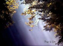 Morgenlicht von bilddesign-by-gitta
