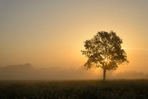 Herbstlicht by J.A. Fischer