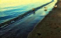 Beach  Birds by Manuela Trost