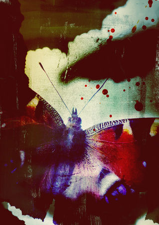 Fearbutterflies-c-sybillesterk