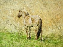 horse von urs-foto-art