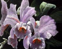 Orchidee Paars by Geert Winkel