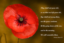 Remembrance by daysphotographic