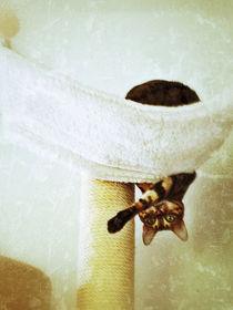 Funny Cat von Manuela Trost