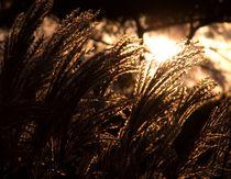 Lichtstrahlen von attiapictures