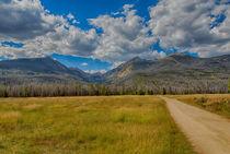 Golden Fields In The Rockies by John Bailey