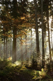 morgendlicher Herbstwald by Karin Stein