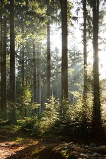 Waldlichtung mit Sonnenstrahlen von Karin Stein