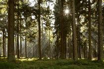Sonnenstrahlen im Herbstwald von Karin Stein