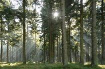 Sonnenstrahlen im Zauberwald by Karin Stein