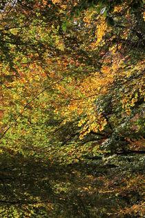 Herbstfarben von Jens Hennig