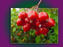 Woodland berries in the frame von Robert Gipson