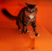 Cat and Beer von Manuela Trost
