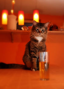 Cat and Beer #2 von Manuela Trost