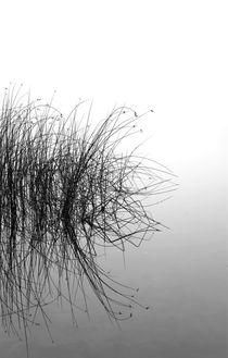 Schilf 5 von Jens Hennig