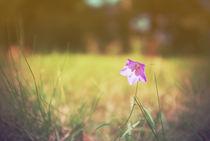 Kleine Blume von Pascal Betke