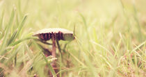 Magic Mushroom #1 by Pascal Betke