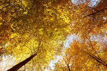 Herbstmomente_03 von tr-design