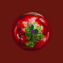 Butterfly Globe with red berries. von Robert Gipson