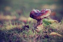 Pilz / Mushroom by Pascal Betke