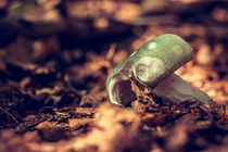 Green Mushroom by Pascal Betke
