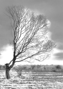 Windflüchter 3 von Jens Hennig