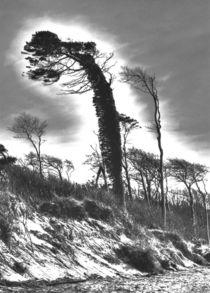 Windflüchter 2 von Jens Hennig