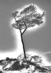 Windflüchter 1 von Jens Hennig
