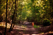 Woodland Walkies by Vicki Field
