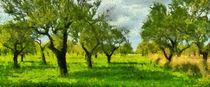 Olivenplantage von Wolfgang Pfensig