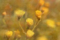 wild flowers von Rosina Schneider