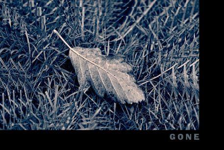 Blatt-1998sw-tilt-c-rahmen-cut-gone