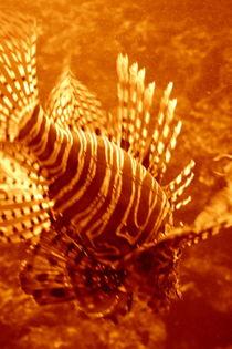 drachenfisch von studio111