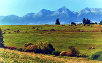 Cows under the High Tatras von Tomas Gregor
