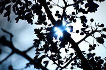 Der Sonnenstrahl von ann-foto