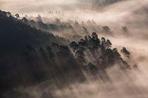 Schatten im Nebelwald III