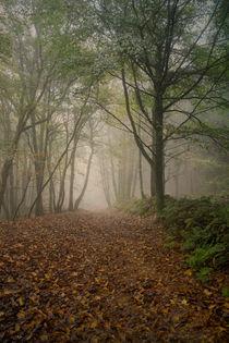 Misty Autumn Beech  by David Tinsley