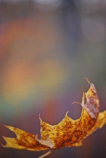 Herbst2014-13