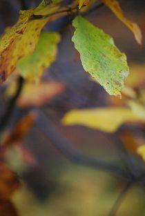 Herbst2014-19