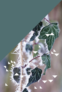 winter ivy & triangles von Eva Stadler