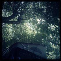 Blick in eine Baumkrone an der Dordogne by flo reichART