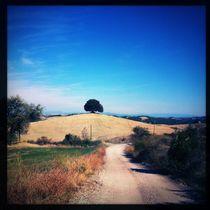 Feldweg mit Blick auf Baum in Umbrien von flo reichART